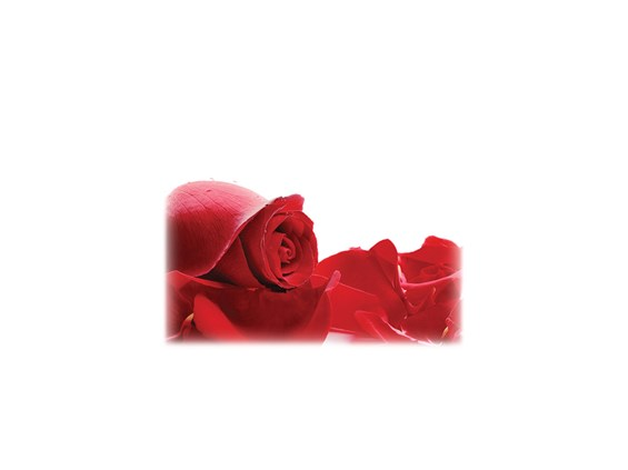 Red Roses-Legacy Two Urn Vault Print