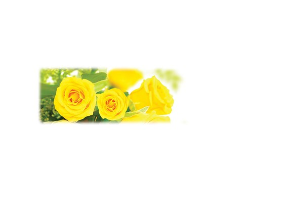 Yellow Roses-Wilbert Legacy Two Print