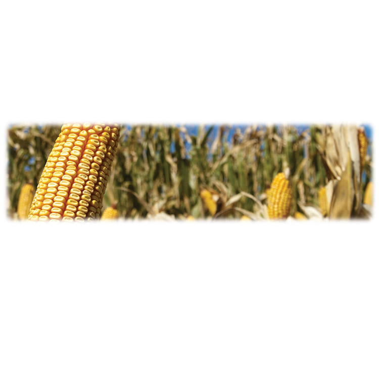 Corn-Wilbert Legacy Two Print