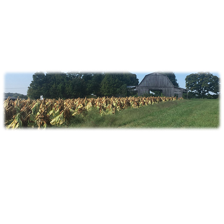 Tobacco Field-Wilbert Legacy Two Print
